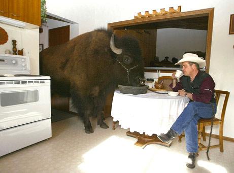060802-buffalo_big